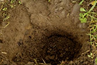 土壌の特徴