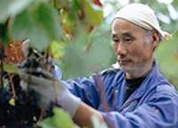 葡萄栽培者:弘津 敏